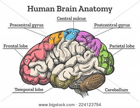 Human in anatomy diagram. Sections of head in vector ... on study skills diagram, brain diagram, anthropometry diagram, art history diagram, superficial anatomy, heart diagram, skeleton diagram, human body diagram, female reproductive system diagram, human brain, integumentary system, human body, human skeleton, body parts diagram, veterinary dentistry diagram, epigenetics diagram, somatosensory system diagram, human anatomical terms, human physiology, consciousness diagram, musculoskeletal system, human organ diagram, muscle diagram, circulatory system, pertinent lab values diagram, chest cavity diagram, composition of the human body, visible human project, nervous system, cardiovascular system diagram, digestive system diagram,