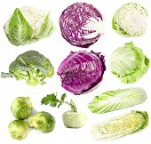 set of cabbage