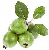 Pineapple Guava. Feijoa sellowiana