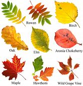 collection beautiful colourful autumn leaves with name, isolated on white background