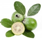 Feijoa (Acca sellowiana) - Pineapple Guava isolated
