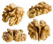walnut isolated on white background