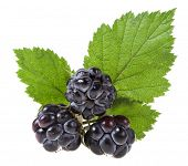 Blackberry ( dewberry ) with a green leaf on a white background