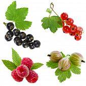 collection of fresh garden berries