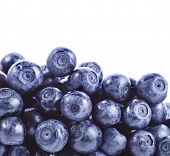 blueberry isolated over a white