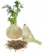 fennel and dill isolated over white background