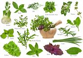 stock photo of escarole  - Fresh herbs collection isolated on white background - JPG