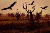 Silhouettes Of Turkey Vultures And Grapevines
