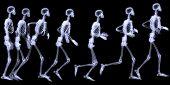 Human Skelegon Running, Radigraphy Sequence