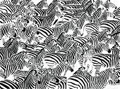 stock photo of hoof prints  - big herd of abstract zebras vector illustration - JPG