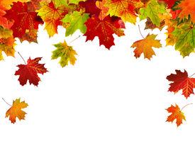 stock photo of fall leaves  - autumn leaves - JPG