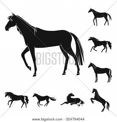 poster of Isolated Object Of Fauna And Mare Icon. Set Of Fauna And Stallion Stock Vector Illustration.