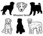 Wheaten Terrier Set. Collection Of Pedigree Dogs. Black White Illustration Of A Wheaten Terrier Dog. poster