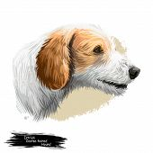 Istrian Coarse-haired Hound, Istrian Rough-coated Hound Dog Digital Art Illustration Isolated On Whi poster