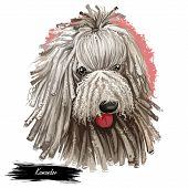Komondor, Hungarian Komondor, Hungarian Sheepdog, Mop Dog Digital Art Illustration Isolated On White poster