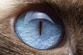 Close-up Of The Cats Eyes Are Blue And Small Hairs Around The Eyes. Selective Focus Of The Blue Eye poster