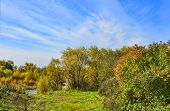 Idyllic Bright Multicolored  Autumn Landscape With Little Forest River At Background, Streaming Betw poster