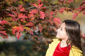Fall Colors. Little Child Walk In Autumn Forest. Small Girl Play On Fresh Air On Sunny Autumn Day. L poster