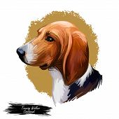 Treeing Walker Coonhound Or Tennessee Lead Dog Breed Portrait Isolated. Digital Art Illustration, Wa poster