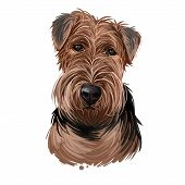 Welsh Terrier Dog Breed Portrait Isolated On White. Digital Art Illustration, Animal Watercolor Draw poster