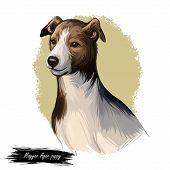 Magyar Agar Puppy Dog Sighthound Canine Digital Art. Austro-hungarian Empire Originated Pet, Domesti poster