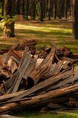 Dry Chopped Firewood Logs In A Heap Closeup. A Pile Of Firewood In The Forest. Firewood In A Forest  poster