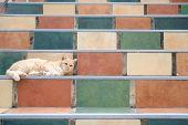 Orange Cat Tabby Feline Lying Resting On Stairs poster