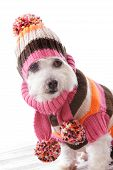 warme Hund tragen gestrickte Mütze und jumper