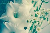 Soft Focus White Flower Blur Close Up In Soft And Blurred Style For Background. Soft Selective Focus poster