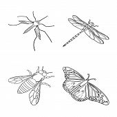Vector Illustration Of Fauna And Entomology Icon. Collection Of Fauna And Animal Stock Vector Illust poster