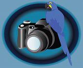 Kamera und Vogel