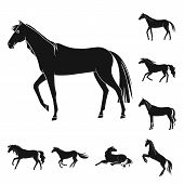 Isolated Object Of Fauna And Mare Icon. Set Of Fauna And Stallion Stock Vector Illustration. poster