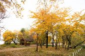 Place Of Magic. Urban Park In Fall. Park Landscape In Autumn. Trees Change Color In Park. Autumn Par poster