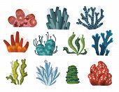 Set Of Cartoon Underwater Plants And Creatures. Vector Isolated Corals And Algae. poster