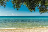 Sunny Scenic Adriatic Sea Beach. Crystal Clear Turquoise Water, Rocky Waterfront And Tree Branches O poster