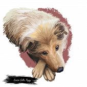 Scotch Collie Pet With Long Fur, Furry Domestic Animal Sticking Out Tongue Pet Hand Drawn Portrait.  poster