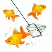 Catching of the goldfish. Success concept. Business metaphor.