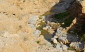 Wadi Qelt or Nahal Prat creek in Judean Desert near Jericho