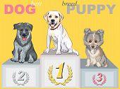 Vector Happy Puppy Dog Champion On The Podium