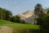 stock photo of oasis  - Oasis in Judean Desert at Wadi Qelt near Jericho in spring - JPG