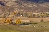 farmland at foothills of Rocky Mountains at Belvue near Fort Collins, Colorado; fall scenery at sunrise