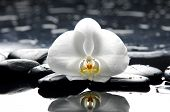 Beautiful white orchid with zen stones on black background