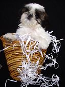 Puppy In Waste Basket