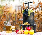 pic of wine-press  - Autumn harvest concept grape autumn fruits and wine with juice squeezer on rustic table - JPG