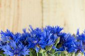 cornflowers isolated