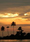 Orange sunset with palm tree silhouettes