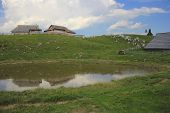 stock photo of velika  - Alpine puddle in the rain - JPG
