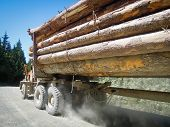 Logging truck carries a heavy load of trees cut down from the forest.