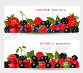 Two borders made of berries. Vector illustration