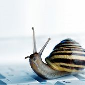 Close up of a snail on a laptop with copyspace